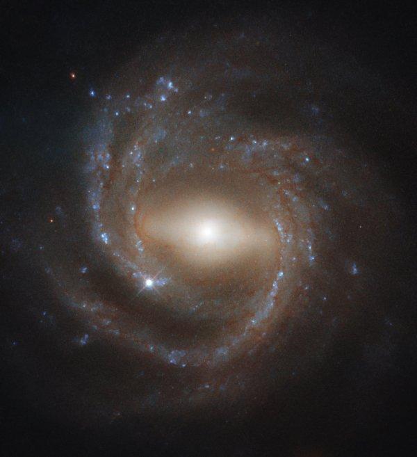 L'IMAGE & L'INFO ASTRO DU JOUR : Maturité galactique ! Le télescope spatial HUBBLE est à l'origine de cette époustouflante et emblématique photographie de NGC 7773, un bel exemple de galaxie spirale barrée. Une structure en forme de barre lumineuse traverse nettement le noyau brillant de la galaxie, s'étendant jusqu'à la limite intérieure des bras en spirale de NGC 7773. Les astronomes pensent que ces structures de barres apparaîtront plus tard dans la vie d'une galaxie, à mesure que le matériau formant l'étoile se dirige vers le centre galactique, les spirales plus jeunes ne comportent pas de structures barrées aussi souvent que les spirales plus anciennes, ce qui suggère que les barres sont un signe de galaxie mature. On pense également qu'elles agissent comme des pépinières stellaires, alors qu'elles brillent de mille feux avec un grand nombre de jeunes étoiles. Notre galaxie, la Voie lactée, est considérée comme une spirale barrée comme celle de NGC 7773. En étudiant des spécimens galactiques tels que NGC 7773 dans l'Univers, les chercheurs espèrent en savoir plus sur les processus qui ont façonné - et continuent de façonner - notre foyer cosmique ! (Sources NASA-HUBBLE-ESA)