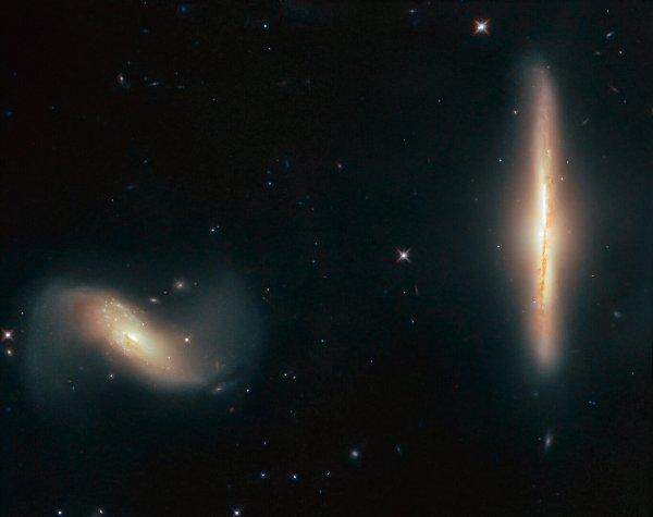 L'IMAGE & L'INFO ASTRO DU JOUR : UNE RELATION ÉTROITE ! Certaines galaxies sont des amis plus proches que d'autres. Tandis que beaucoup vivent leurs propres vies séparées et solitaires, d'autres se rapprochent un peu trop près d'un voisin et poussent leur relation au niveau supérieur. La galaxie sur cette image du télescope spatial HUBBLE, nommée NGC 6286, a fait exactement cela! Ensemble avec NGC 6285, le duo s'appelle Arp 293 et ils interagissent, leur attraction gravitationnelle mutuelle tirant des traînées de gaz et des flots de poussière, déformant leurs formes, masquant doucement et brouillant leurs apparences dans le ciel. Arp 293 est situé dans la constellation du Dragon, à plus de 250 millions d'années-lumière de la Terre. (Sources NASA-HUBBLE-ESA)