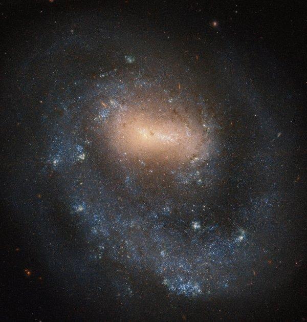 """CONFINEMENT, RÊVONS D'ESPACE : GALAXIE A BRAS UNIQUE ! NGC 4618 a été découverte le 9 avril 1787 par l'astronome Wilhelm Herschel, qui a également découvert Uranus en 1781. Herschel a émis l'hypothèse que les objets """"brumeux"""" que les astronomes voyaient dans le ciel nocturne étaient susceptibles d'être de grands amas d'étoiles situés beaucoup plus loin que les étoiles individuelles qu'il pouvait facilement discerner. Depuis que Herschel a proposé sa théorie, les astronomes ont compris que ce qu'ils voyaient était une galaxie. NGC 4618, classée comme une galaxie spirale barrée, a la distinction spéciale parmi les autres galaxies spirales de n'avoir qu'un seul bras tournant autour du centre de la galaxie. Elle est située à environ 21 millions d'années-lumière de notre galaxie. (Sources NASA-HUBBLE-ESA) Prenez soin de vous et de vos proches."""