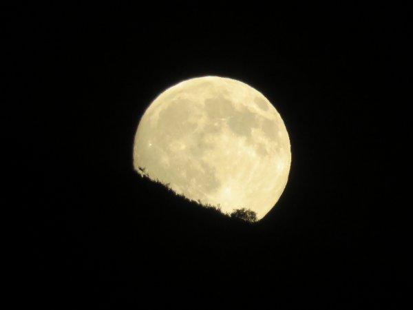 CONFINEMENT, RÊVONS D'ESPACE ET OBSERVONS : Une nouvelle 'super-Lune ce soir !' Lors de cet événement présenté comme la dernière « super Lune » observable cette année, l'astre serait apparemment plus imposant et visible que d'habitude dans le ciel. Or, comme à chaque fois que cette expression est utilisée pour décrire la Lune, il n'y a en réalité rien de spécial. Tout simplement d'une Pleine Lune survenant lors d'un périgée très favorable, c'est-à-dire l'instant où notre satellite naturel passe au plus près de la Terre, à 356.700km. Cet écart peut sembler important, mais en réalité, il ne vous sera pas possible de comparer, du coup il est quasiment impossible à l'½il nu d'apprécier cette différence. Vous pouvez cependant observer la Lune ce soir et les jours suivants. Restez bien chez vous, et prenez soin de vous et de vos proches.