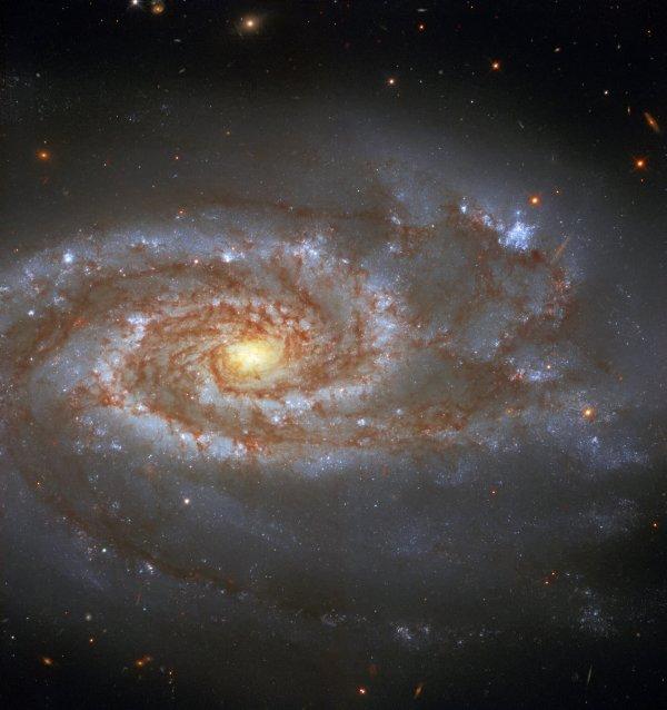RÊVONS D'ESPACE ET OBSERVONS : DEUX SUPERNOVÆ, UNE GALAXIE ! À environ 85 millions d'années-lumière de la Terre, dans la constellation de la Balance, se trouve la belle galaxie NGC 5861, capturée ici par le télescope spatial HUBBLE. C'est une galaxie spirale intermédiaire. Les astronomes classent la plupart des galaxies selon leur morphologie. Par exemple, la galaxie de la Voie lactée est une galaxie spirale barrée. Une galaxie spirale intermédiaire a une forme située entre celle d'une galaxie spirale barrée, une qui semble avoir une structure en forme de barre centrale, et celle d'une galaxie spirale non barrée, une sans barre centrale. Deux supernovæ, SN1971D et SN2017erp, ont été observées dans la galaxie. Les supernovæ sont des explosions puissantes et lumineuses qui peuvent éclairer le ciel nocturne. La supernova la plus brillante jamais enregistrée était peut-être SN 1006. Elle brillait 16 fois plus brillante que Vénus du 30 avril au 1er mai 1006 après JC. (Sources NASA-HUBBLE-ESA)