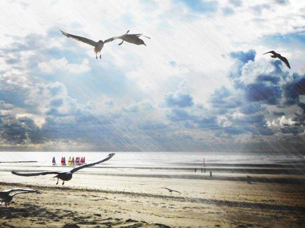 """""""Je pense que les oiseaux sont des anges"""" - Marguerite Yourcenar"""