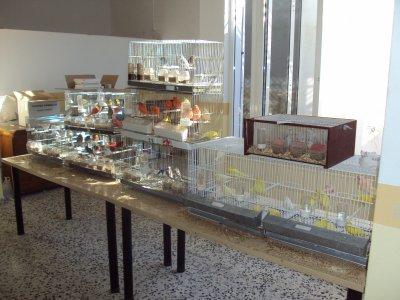 Concurso de color La Palma del Condado-Villalba del Alcor