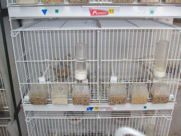 Visita al aviario Navarro