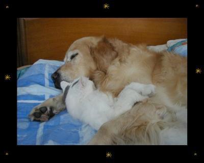 animaux rime avec amie