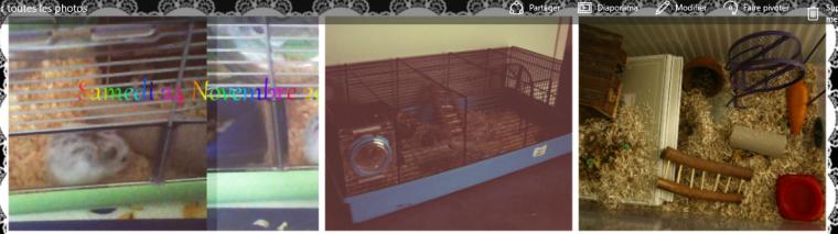 Avoir un hamster.