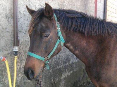 si on me demander pourquoi c'est chevaux,,pourquoi c'est animaux et pourquoi cette vie je devrais simplement sourir car sinon ce serai 13 année a raconter <3