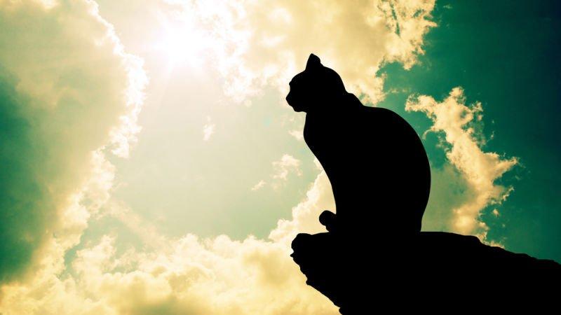 L'Univers Katzen