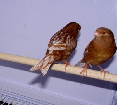 pareja phaeos 2010