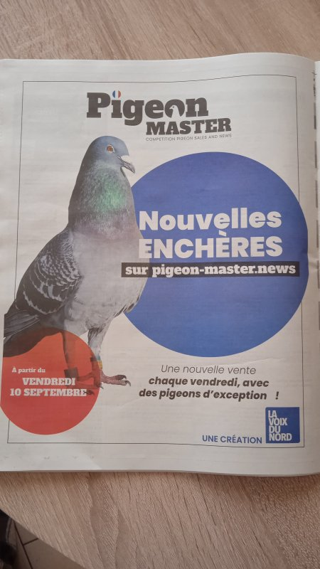 Les ventes aux enchères sont commencer sur Pigeon Master 😍