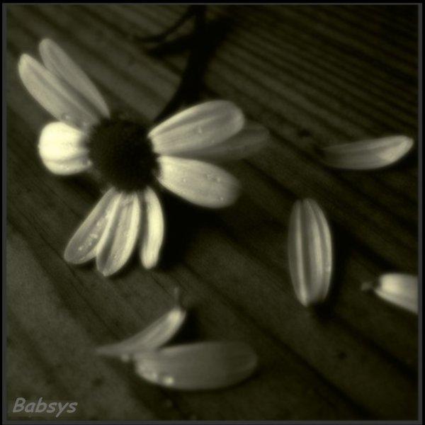 Fleur Fanee Journalphoto