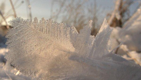 """"""" Frozen """" ..."""
