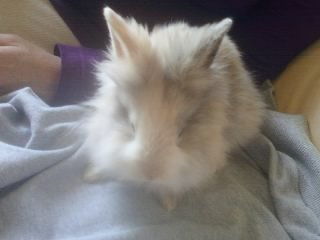 Mon lapin :p
