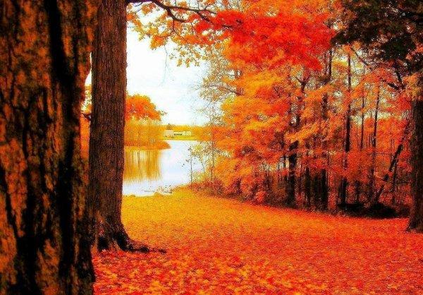 """William Wilkie Collins: """" Les feuilles mortes, que le vent d'automne faisait tournoyer à mes pieds, étaient semblables à mes pauvres espoirs envolés. """""""