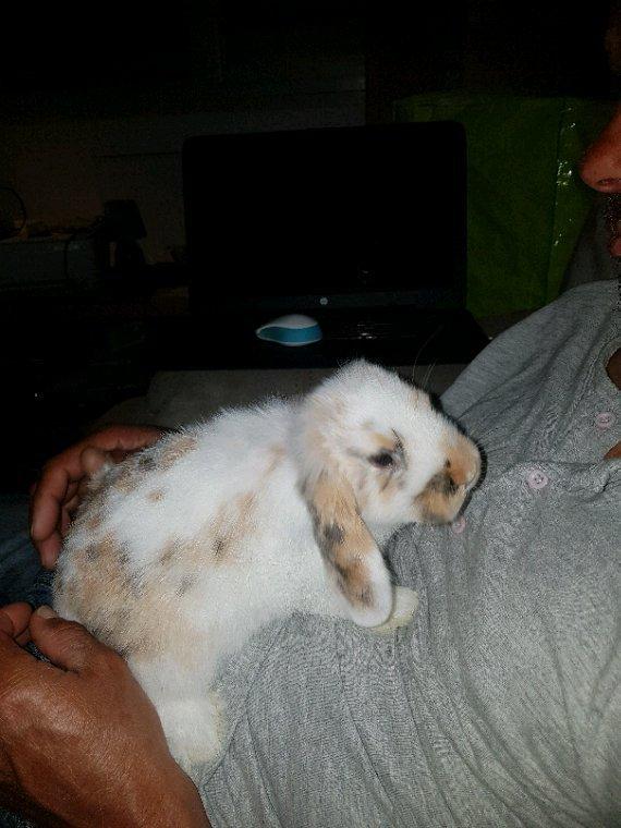 Mes lapins :)