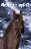 Photo de Graphic-horse