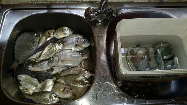 Été pêche Tanger 2015