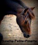 Photo de Sucette-Petite-Ponette