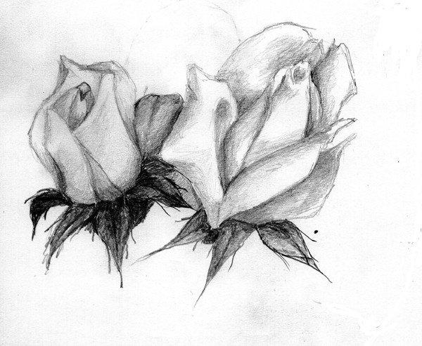 Rose Noir Et Blanc Mes Aquarelles