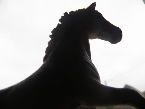 Info des nouveaux chevaux