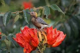 Une espèce de oiseau parmis les plus belles qui puissent existerr