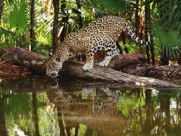 la faune sauvage d'Amazonie