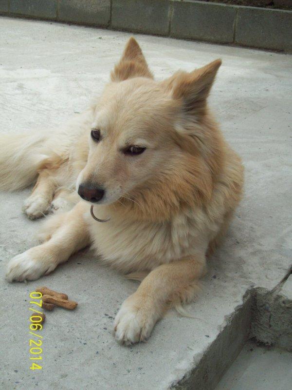 mon chien prince
