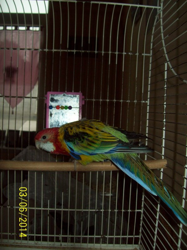moi oiseaux chypi