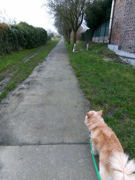 mon chien prince en balade