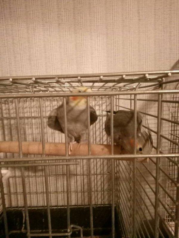 mes deux amours d'oiseaux
