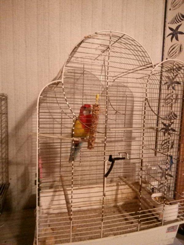 mon oiseau chipy