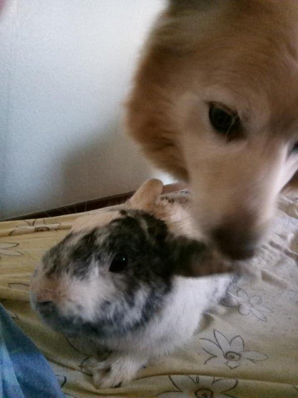 mon chien prince et mon lapin grisbouille