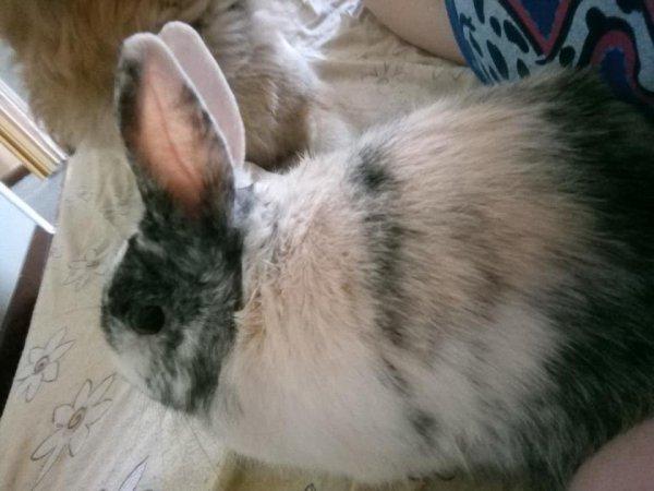 mon lapin grisbouille