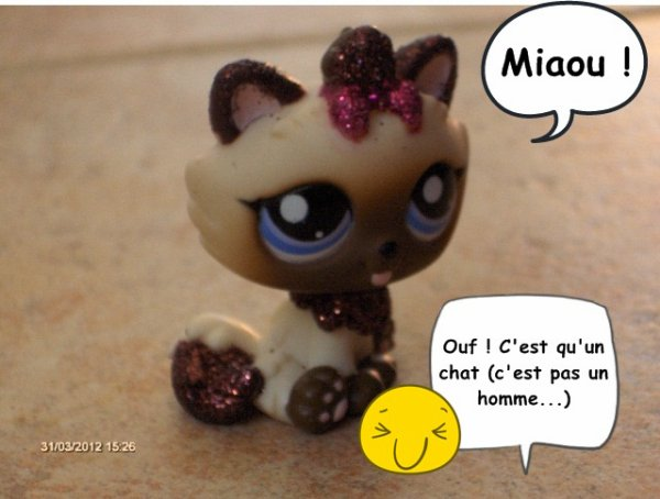 Photo Story N°2: Misty a un chaton !