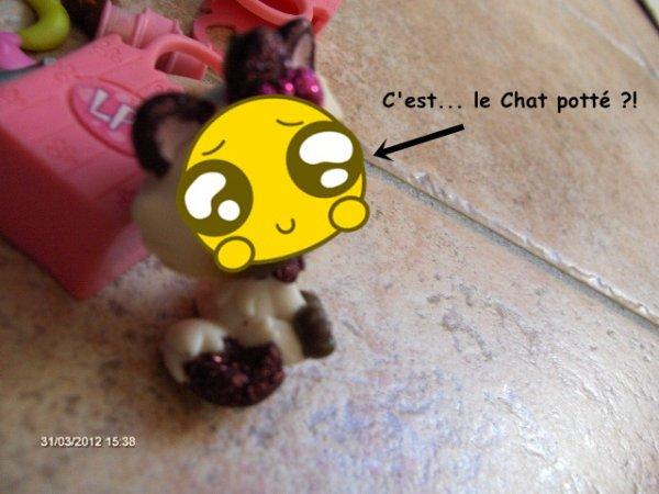 PhotoStory N°2: Misty a un chaton ! (suite)