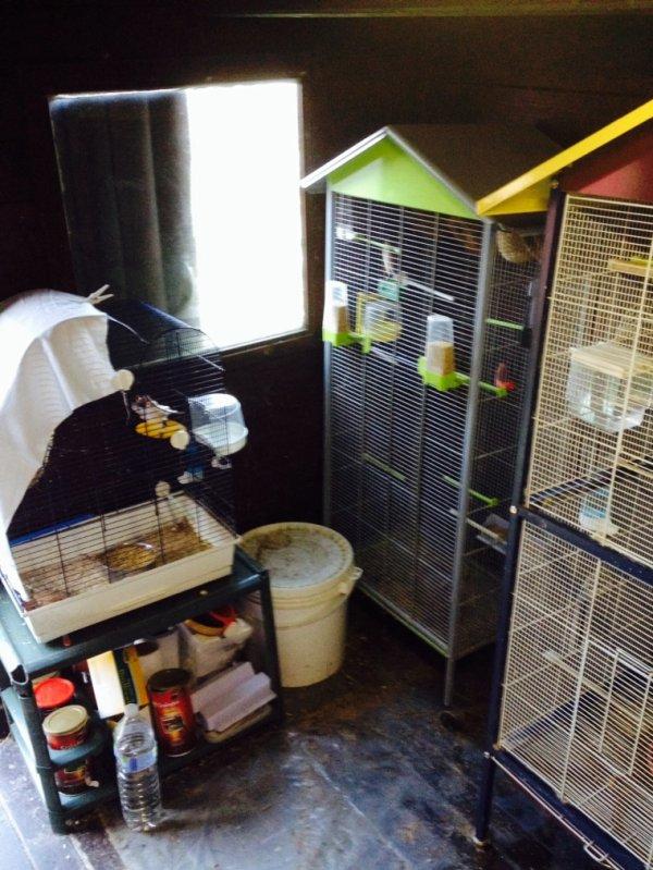 Ma cage de reproduction et mes 2 volières