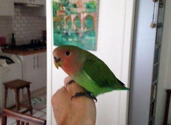 Marc nous envoie les premières nouvelles et  photos de Chico parti rejoindre Cali (Masque orange)