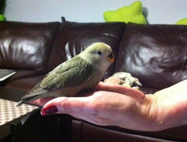 Sabrina nous donne des nopuvelles du petit Oliver