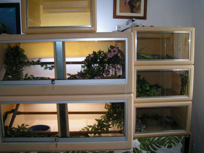 Blog de reptile 84 blog de reptile 84 - Tapis chauffant terrarium ...