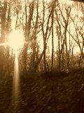 Photo de Forest-Calling