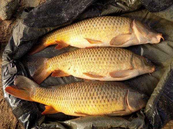quelques fish en fin d'été