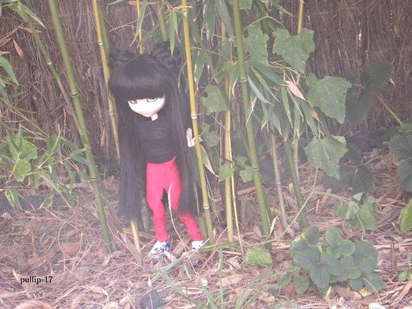 Séance de Kim au milieu des bambous. (suite).