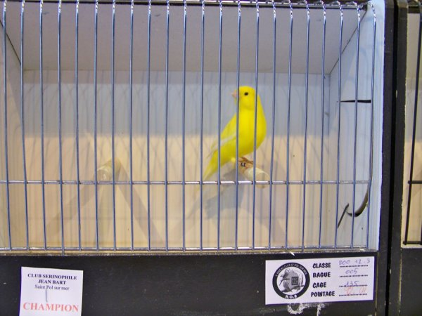 lipo jaune intensif