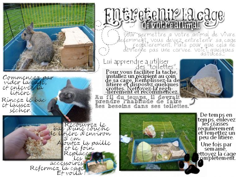 Entretenir la cage de votre animal