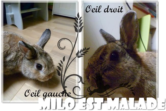 Milo est malade !