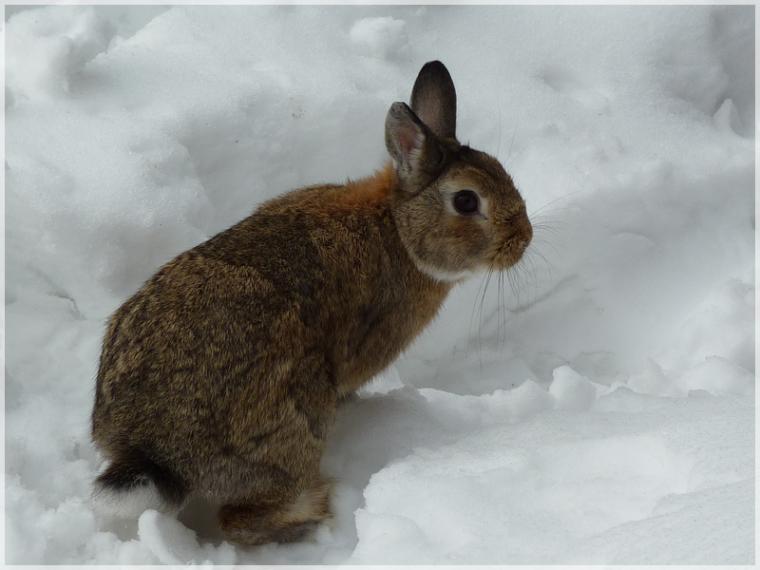 Milo et la neige, une grande histoire d'amour ...