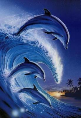 serie de  cartes dauphins