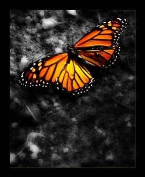 serie papillon