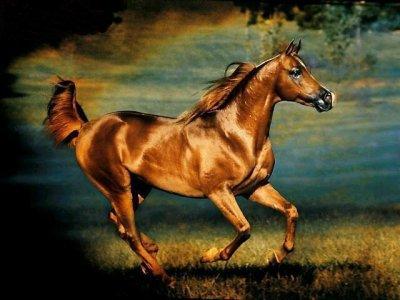 serie chevaux
