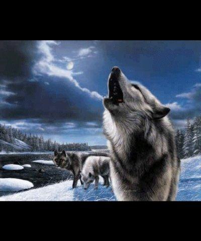 serie loups